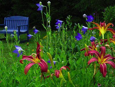 Bg-lilies