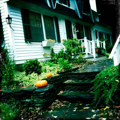 allsorts: Garden