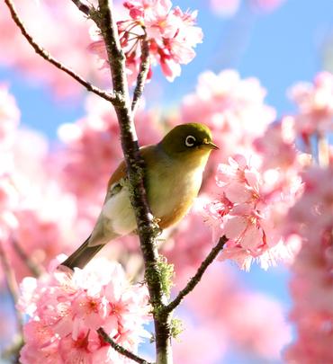Desktopbird